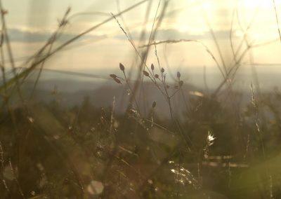 Provence-010